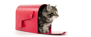 Why Email Is Like Schrödinger's Cat And How This Doesn't Have To Be A Problem